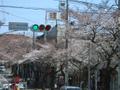 2007/03/28 桜が咲き始めました