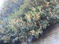 2013/10/09 オレンジ色の憎いやつ???